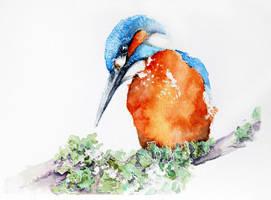 Kingfisher- watercolor painting by Kakiaart