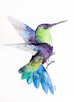 Hummingbird - traditional watercolour painting by Kakiaart