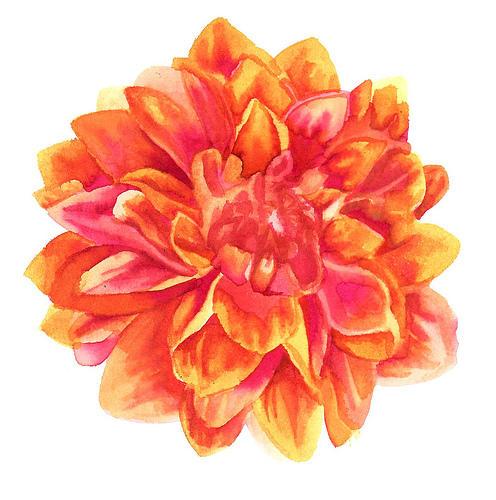 Pretty Orange Flower By Princesscleodenile On Deviantart