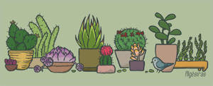 Cacti and succulents by Algesiras