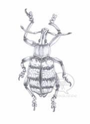 Weevil by comixqueen