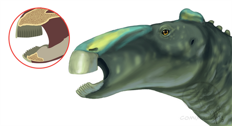 Hadrosaur Rhamphotheca by comixqueen