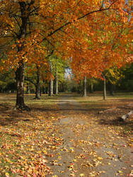 tower grove park autumn 2011 by sun-design09s-trent
