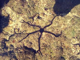 Brittle star by zakyotics