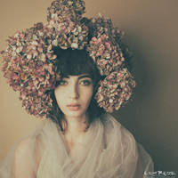 getrocknete Blumen by LichtReize
