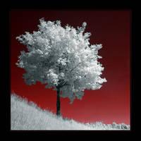a free tree II by tisbone