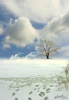 Winter Tree by vimark