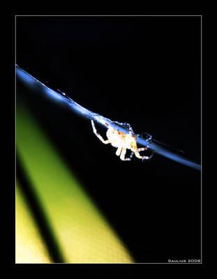 Spider by c0oper