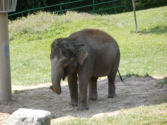 Baby Elephant by L1701E