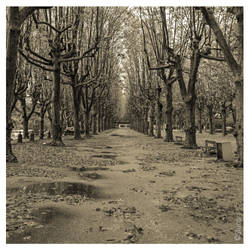 Autumn Leaves - Pt II by SIUCAR