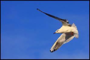 Free as a bird by lichtschrijver