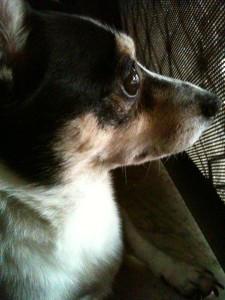 Lumarie's Profile Picture