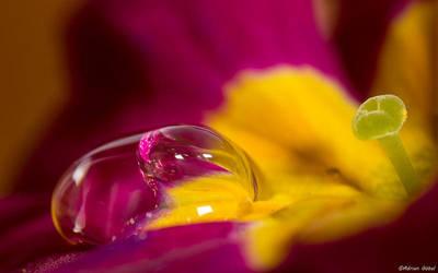 Waterdrop by AdrianGoebel