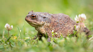 Toad by AdrianGoebel