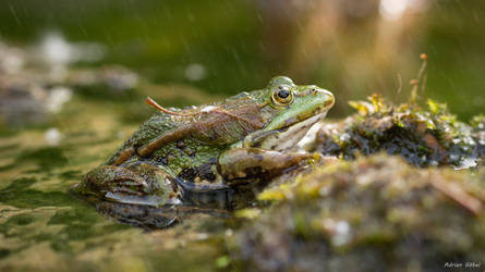 Camouflage by AdrianGoebel