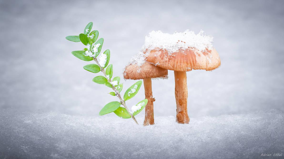 Winter Wonderland by AdrianGoebel