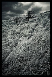 Waves of grass by MessiahKhan