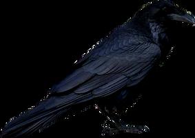 Bird 1 by ViolettaLeStrange