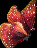 Butterfly Stock by ViolettaLeStrange