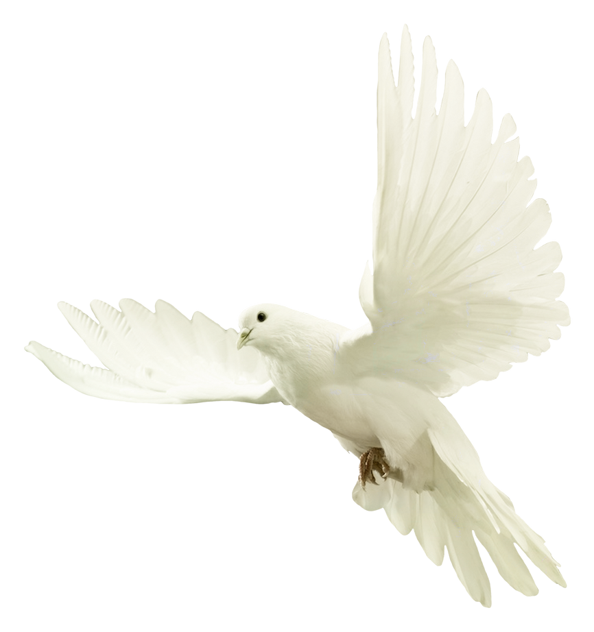 Dove by ViolettaLeStrange