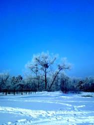 Winter's back by Kennysz