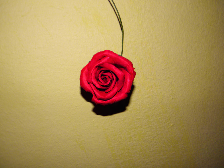 Red rose by jeannemoon