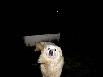Evil Dog by allanon71