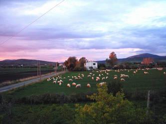 Orange Sheeps by allanon71