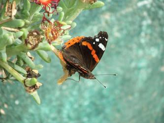Miss Butterfly by allanon71