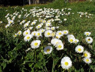 MY-White Carpet-MY by allanon71