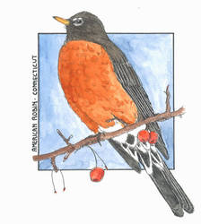 American Robin - Connecticut (Colour) by BattleRager