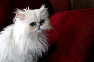 Beautiful Kitten Part 2 by beckyfrancis