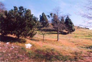 021 Hesse Park-Palos Verdes CA by J2theStock