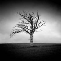 Tree Of Life by NicolasEvariste