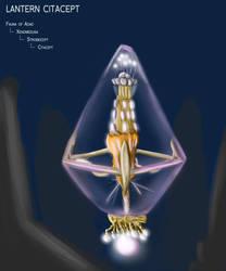 Lantern Citacept by Dingbat1991