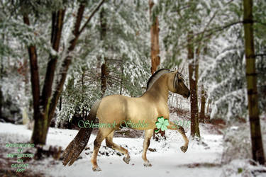 Floki in snow by KendraLongson