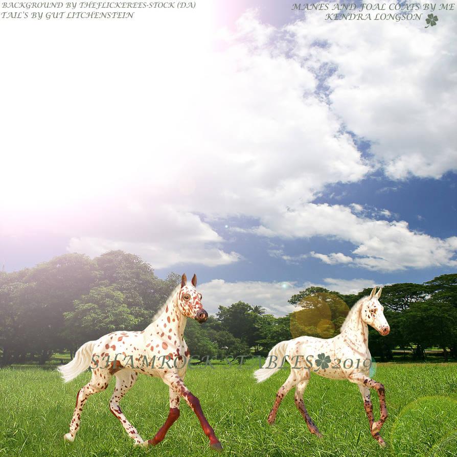 2019 Foals by KendraLongson