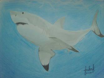 Shark by fonchink