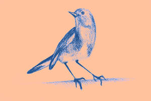 Drawing of hummingbird. Illustration by oanaunciuleanu