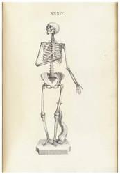 Vintage Human Skeletal 3 by Bnspyrd