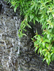 Waterfall by crazyandmuttering