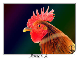 Rooster Head by AMROU-A