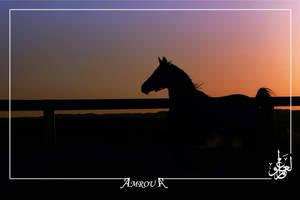 Sayer Silhouette-Arabian horse by AMROU-A