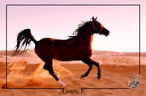 Alfateh - pure Arabian horse by AMROU-A