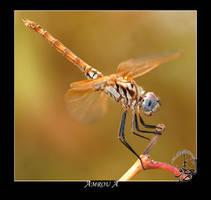 Golden dragonfly by AMROU-A