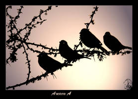 Birds' silhouettes by AMROU-A