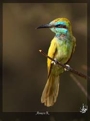 Eurasian bee-eater by AMROU-A