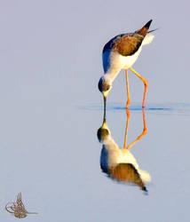 Reflect  by AMROU-A