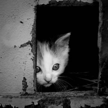 Kitten... by vertatp
