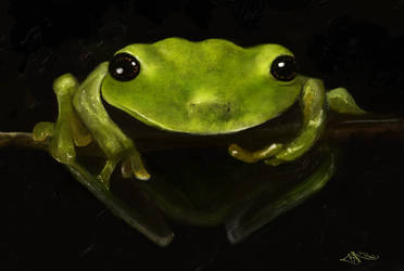 Frog by Jaxilon